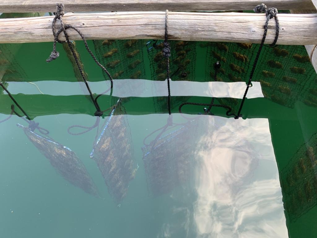 三重県 志摩市 真珠 養殖